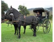 Horse Carriage for Weddings & Special Occasions