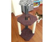 Cat Scratch Posts From R175