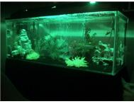 Beautiful 4ft Fish Tank Aquarium wi...