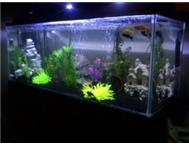 Beautiful 4ft Fish Tank Aquarium with LED Lighting