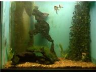 fishtank and fish