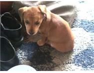 URGENT !!!! HOME NEEDED. a Puppy