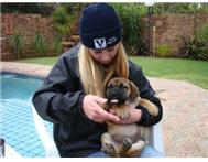 Photo DVD Montages - Pet Triutes in Pet Services KwaZulu-Natal Westville - South Africa
