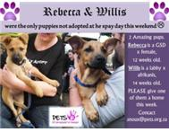 Rebecca & Willis - in foster care - please adopt one of us.