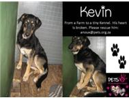 Kevin: GSD From Farm Life to Kennels