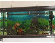 Jebo aquarium for sale Port Elizabeth