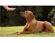 LAST DAY TODAY TO REDEEM 25% OFF DOG TRAINING!