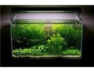 1.2 m fish tank for sale