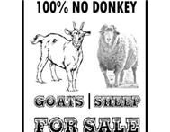 Sheep & goats for sale