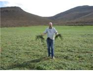 Lucerne for Sale - Koo Valley Montagu - Direct from the Farm.