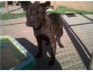 Sharpy needs a proper home - please adopt her