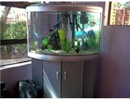 300lt Silver Bow Front Corner Unit Fish Tank For Sale