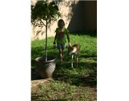 Baby Blesbok in Game For Sale Gauteng Randfontein - South Africa