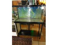 bargan jebo fish tank and dolphin c - 1600 water pump