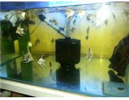Aquarium Freshwater Fish & Equipment