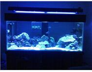 3 month old marine aquarium equipment