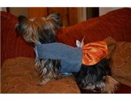 Dog Dress - Denim Couture in Pet Food & Products Eastern Cape East London - South Africa