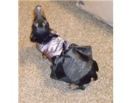 Dog Dress - Dazzling Diva in Pet Food & Products Eastern Cape East London - South Africa