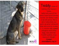Teddy - Her sister was adopted she is alone at Kennels