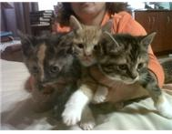 Kittens to give away want good Home...