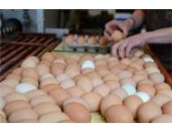 Fertile Hatching Eggs and Fresh Eggs for sale Durban Mission Location