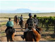 Horse riding for Beginners & Experienced Riders
