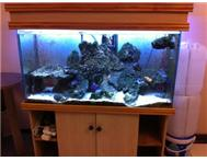 Sea Water Aquarium