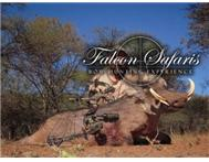 Falcon Safaris Bow Hunting in Travel & Tourism Limpopo Northam - South Africa