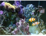 MARINE (SALT WATER ) AQUARIUM FOR SALE - BARGAIN