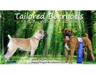 Pedigree Boerboel Puppies for Sale