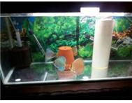 4x Discus tank and imported food