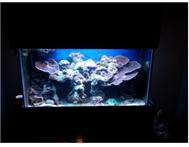 Marine aquarium plus livestock and ...