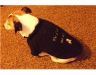 Snuggly Pooch - Dog Jerseys in Pet Food & Products Eastern Cape East London - South Africa