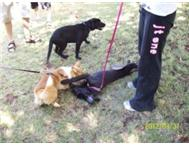 Puppy and Dog training Sunninghill