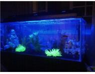 BRAND new 4ft 3ft 2ft and CUSTOM Built Tanks For Sale!