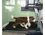 Treadmill Exercise For Your Dog in Pet Services Eastern Cape Port Elizabeth - South Africa