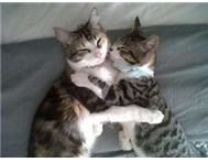 2 loving cats urgently needing a home