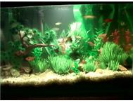 2 x 1.m Fishtanks