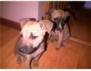 Bailey and Bentley - Up for adoption